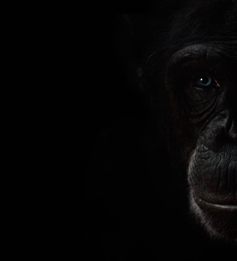 549 The Planet of the Apes by Steven Miljavac