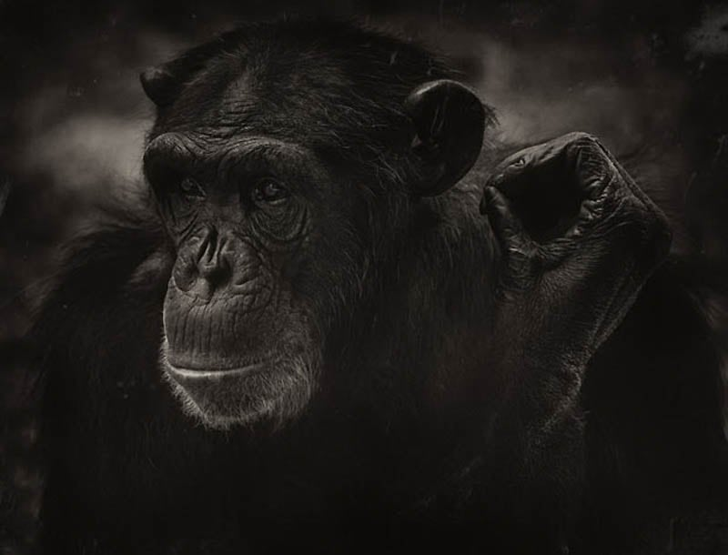 1327 The Planet of the Apes by Steven Miljavac