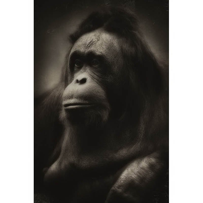 1426 The Planet of the Apes by Steven Miljavac