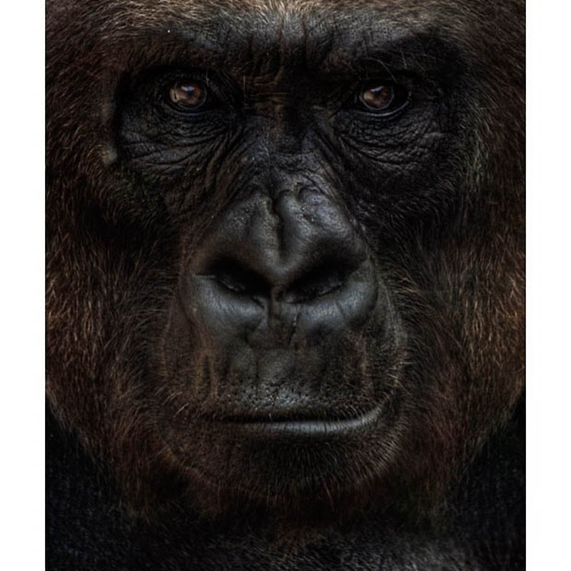 746 The Planet of the Apes by Steven Miljavac