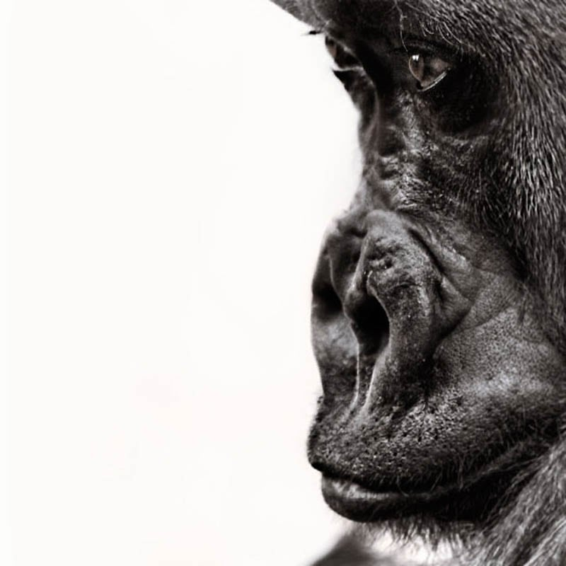 1228 The Planet of the Apes by Steven Miljavac