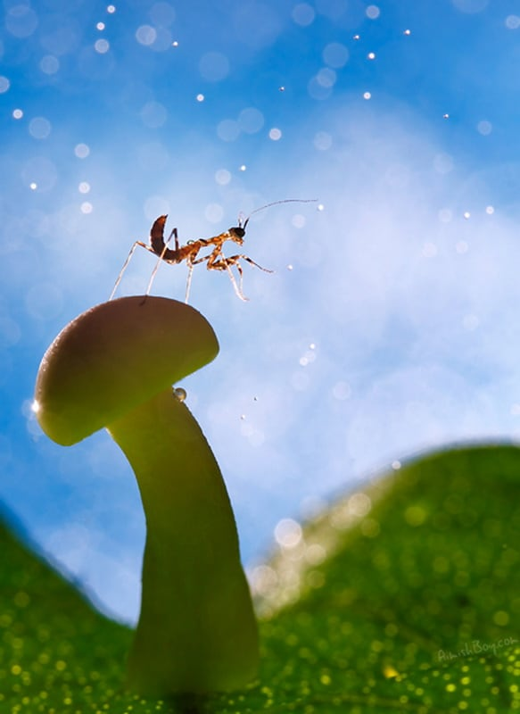 53788 495373 orig - Disney-Inspired Macro Photography of Insects