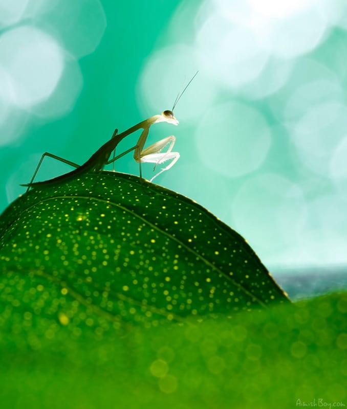 ea477 495370 orig - Disney-Inspired Macro Photography of Insects