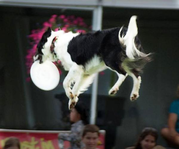12Flying-Dog-sqjpg.img_assist_custom-600x498.jpg