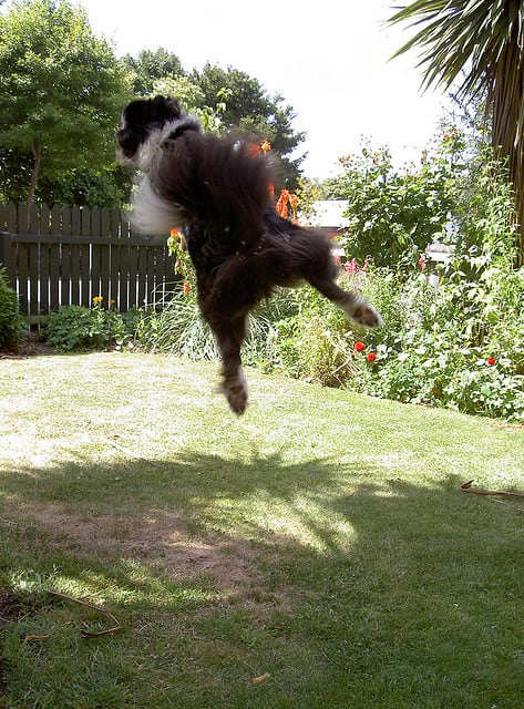 Funny Pics of Flying Dogs Catching Frisbees -dogs