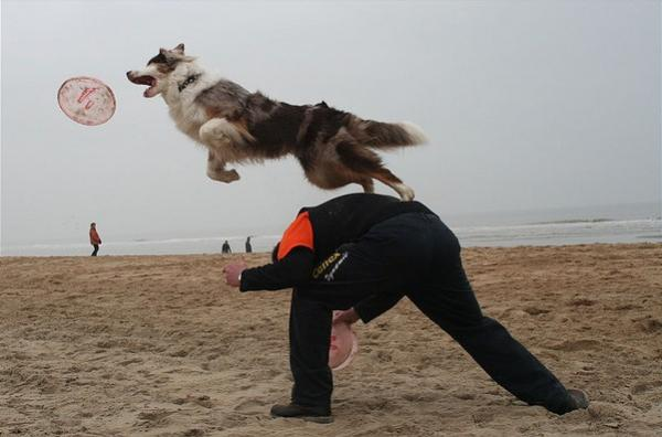 3dog-beachjpg.img_assist_custom-600x397.jpg