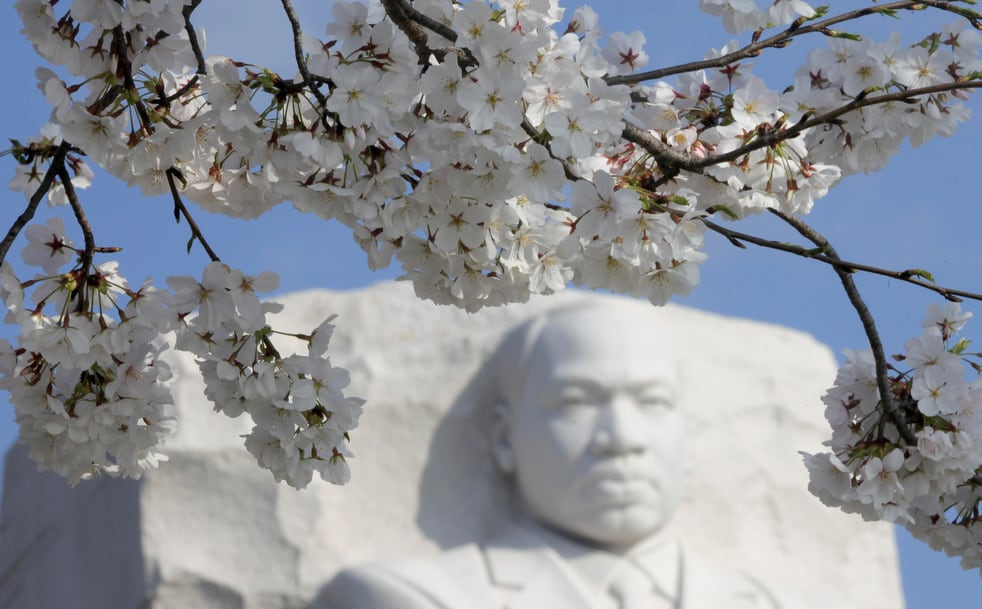 cherry c National Cherry Blossom Festival celebrates 100 years
