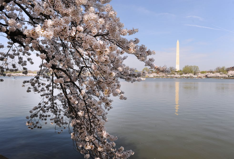 cherry e National Cherry Blossom Festival celebrates 100 years