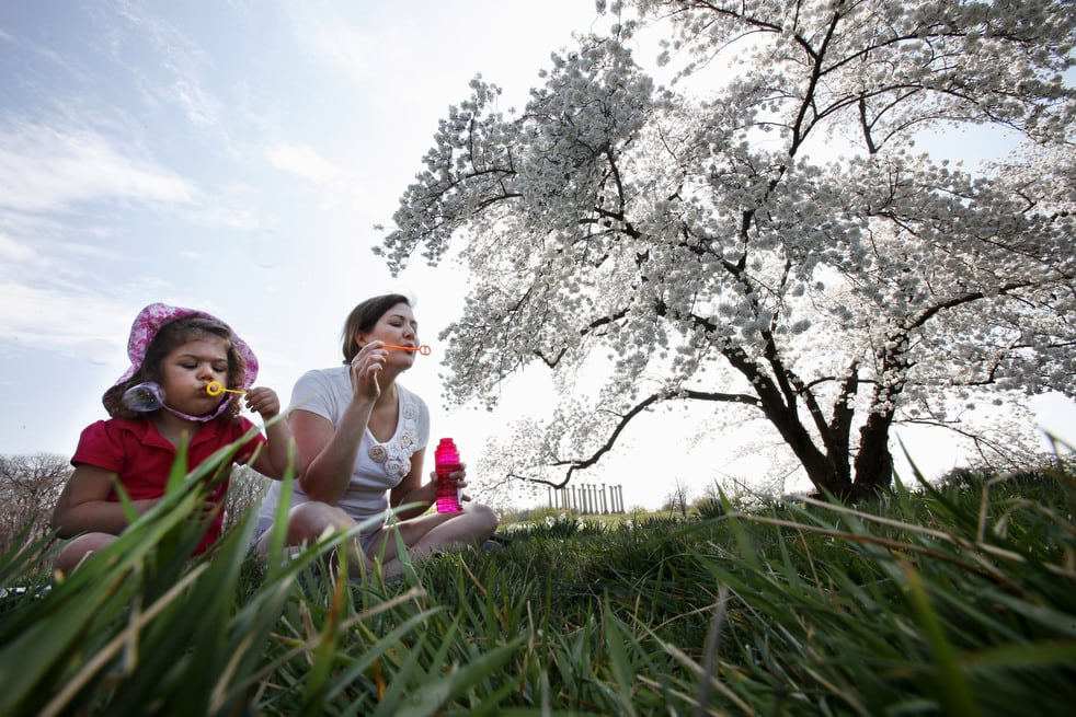cherry q National Cherry Blossom Festival celebrates 100 years