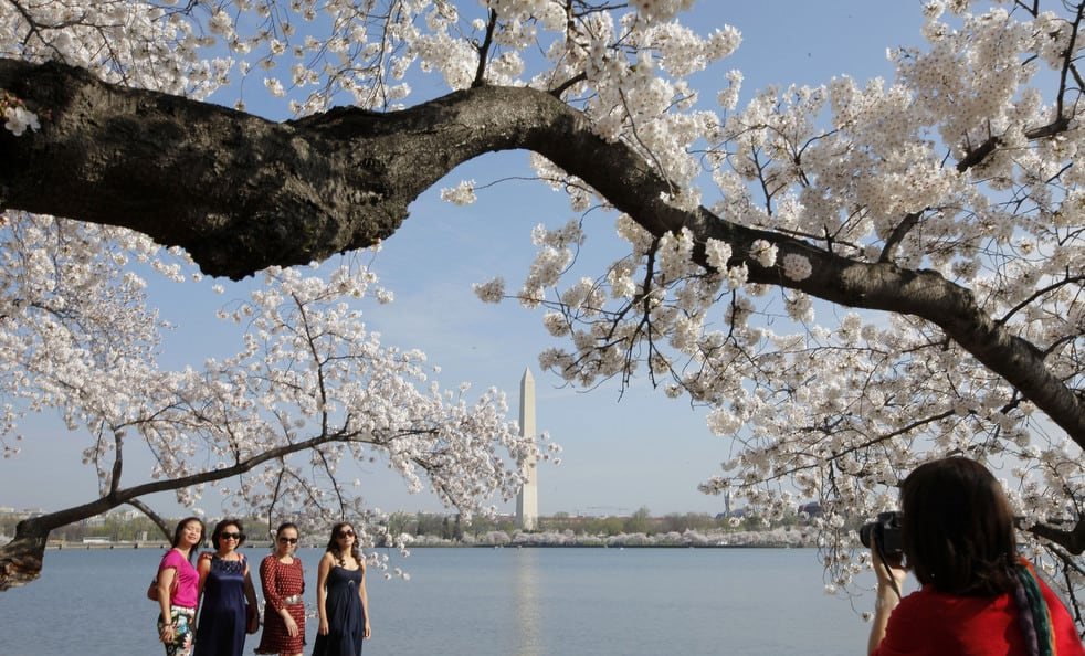 cherry g National Cherry Blossom Festival celebrates 100 years