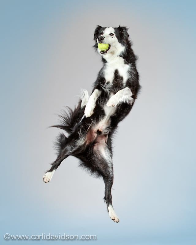 Dogs in Motion 2 by Carli Davidson -dogs