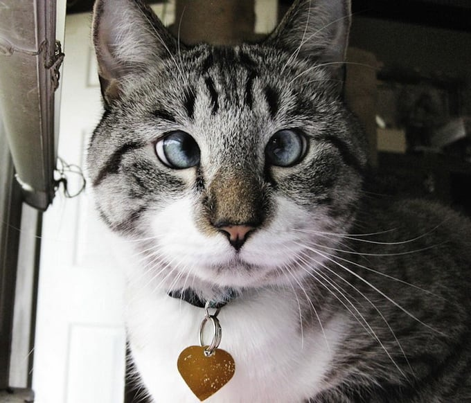 Cross-eyed Сat Spangles -cat