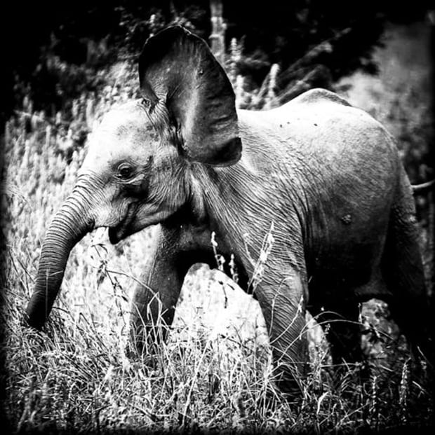 LaurentBaheux01_2.jpg