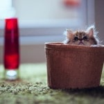 Cutest Kitten Daisy by Ben Torode