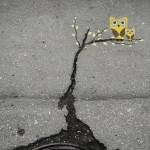 Best Street Art of month around the World