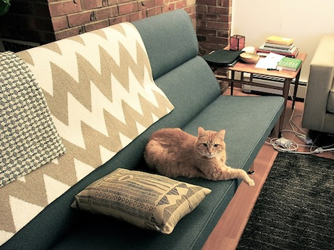 Cats Love Eames -chairs, cats