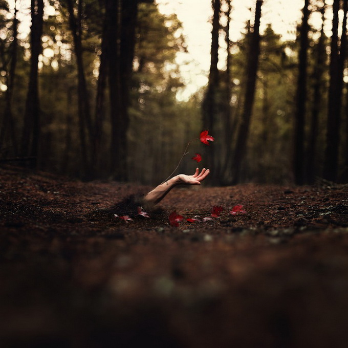 The Surreal Photography of Joel Robinson -trees