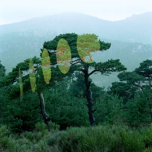 Light projections in Forest by Javier Riera -land-art