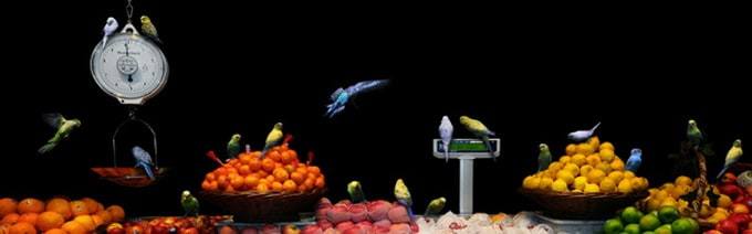 Garden Fresh by Agan Harahap 2 - Animals in the Supermarket
