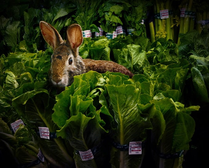 Garden Fresh by Agan Harahap 3 - Animals in the Supermarket