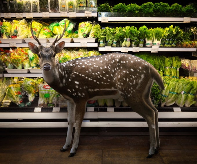 Garden Fresh by Agan Harahap 6 - Animals in the Supermarket