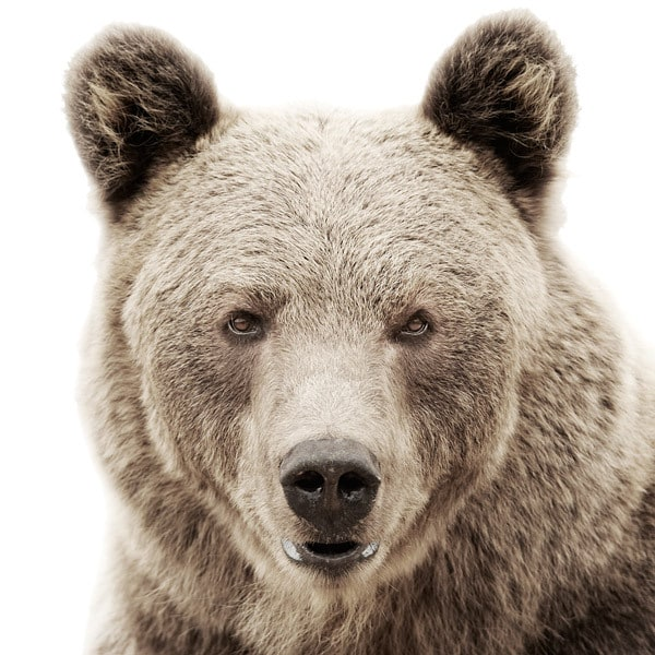 Animal Portraits by Morten Koldby