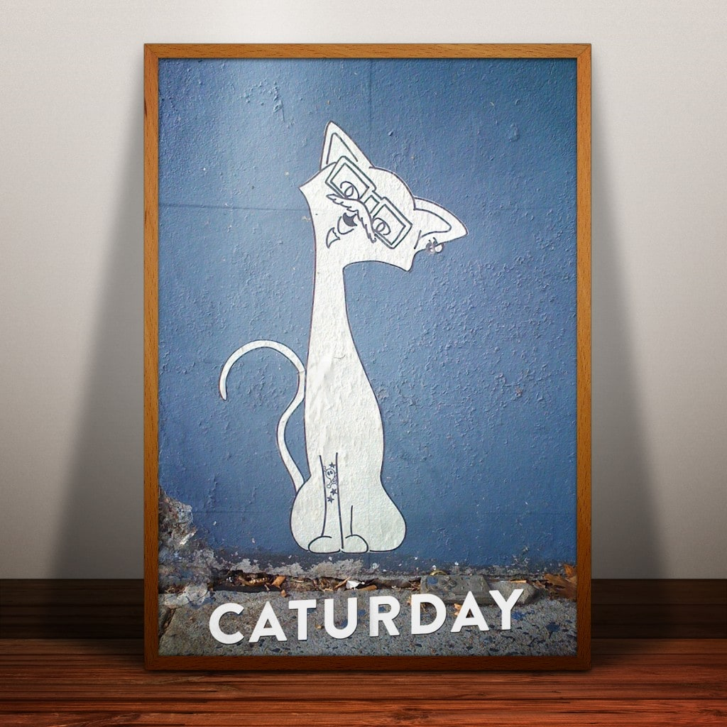 Enjoy the caturday -