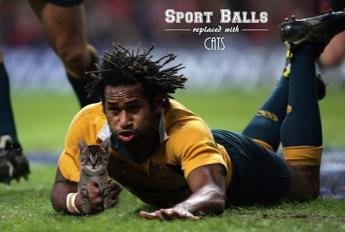 Sport Balls Replaced with Cats -football, cats, basketball