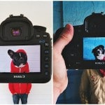 Pets Team Up With Their Owners For #petheadz Photo Project