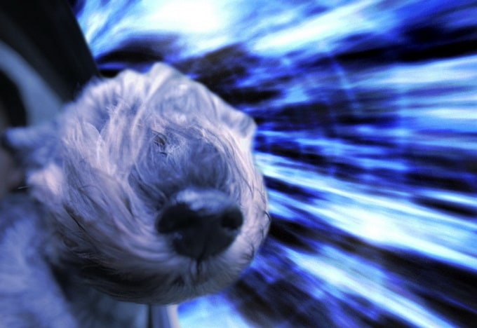 Warp Dogs in Space by Benjamin Grelle -space, dogs, cars