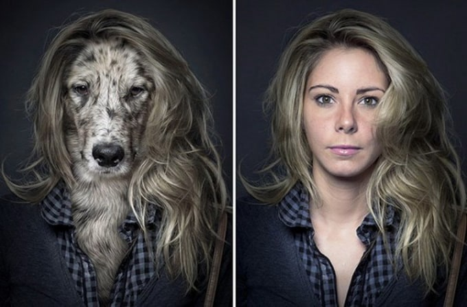 """""""Underdogs"""" by Sebastian Magnani -dogs"""