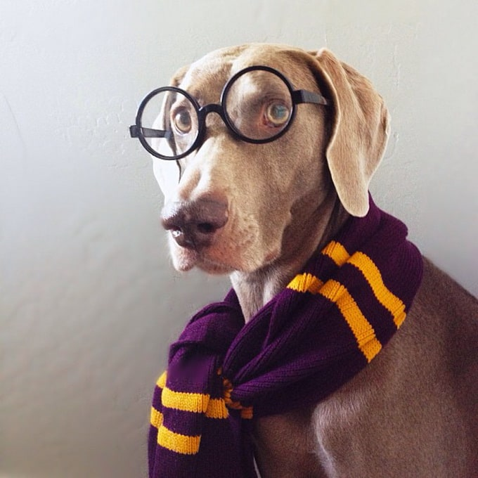 "Dogs ""Harlow"" and ""Sage"" for Instagram -Instagram, funny, fun, dogs, dog, animals"