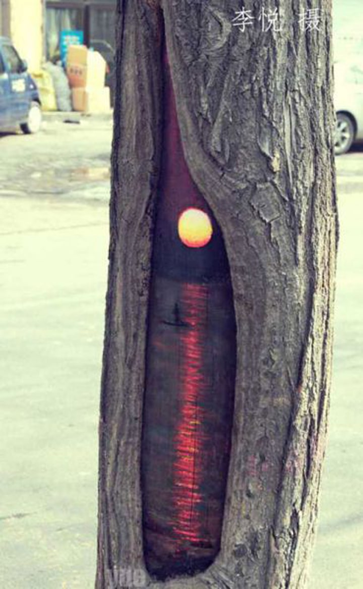 Surprising Paintings on Tree trunks -tree, painting