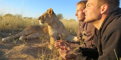 Life With The Lions In Botswana