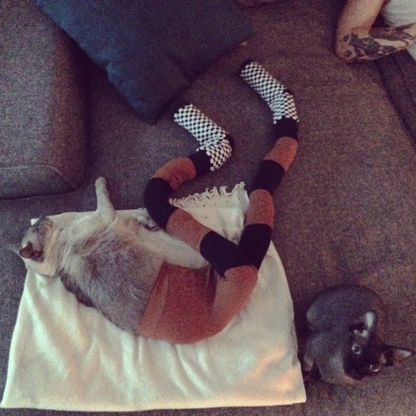 """Funny photo-series """"Cats with tights"""" -popular, photography, photo-series, photo, funny, cats, cat"""