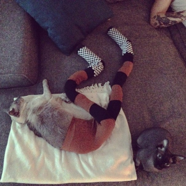"Funny photo-series ""Cats with tights"""