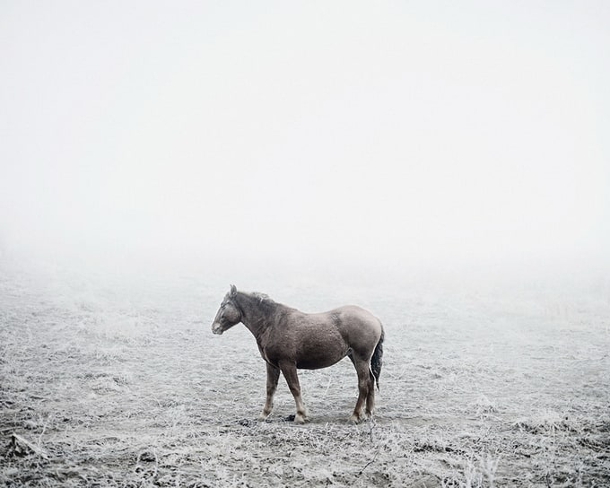 Photographer Tamas Dezso -