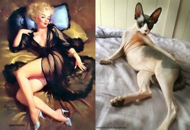 """Popular blog from Tumblr """"Cats That Look Like Pin Up Girls"""""""