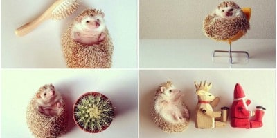 Darcy: The Cutest Hedgehog In The World