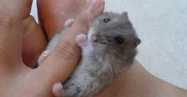 """""""Tiny animals on hand"""" on Flickr by Specklet"""