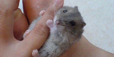 """Tiny animals on hand"" on Flickr by Specklet"