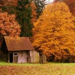 Top 10 Most Beautiful Forest Houses