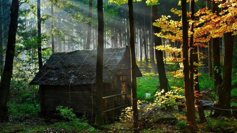 forest_house_1