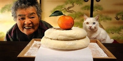 The Life of a Japanese Grandmother and Her Cat