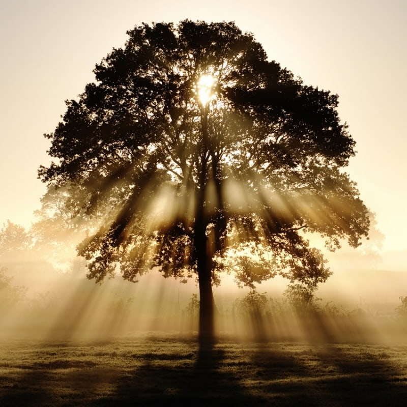 tree with sunlight Top 20 Earth Pictures found on StumbleUpon