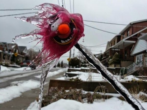A+frozen+and+icy+stuffed+animal.+ +The+30+Most+Amazing+Photos+Of+Frozen+Things+In+Honor+Of+The+Coldest+Morning+Of+The+21st+Century - The 30 Most Amazing Photos Of Frozen Things In Honor Of The Coldest Morning Of The 21st Century