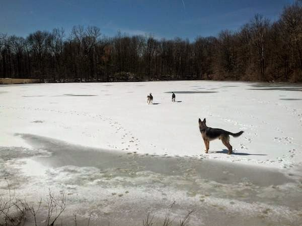 Dogs+enjoying+a+frozen+lake.+-+The+30+Most+Amazing+Photos+Of+Frozen+Things+In+Honor+Of+The+Coldest+Morning+Of+The+21st+Century