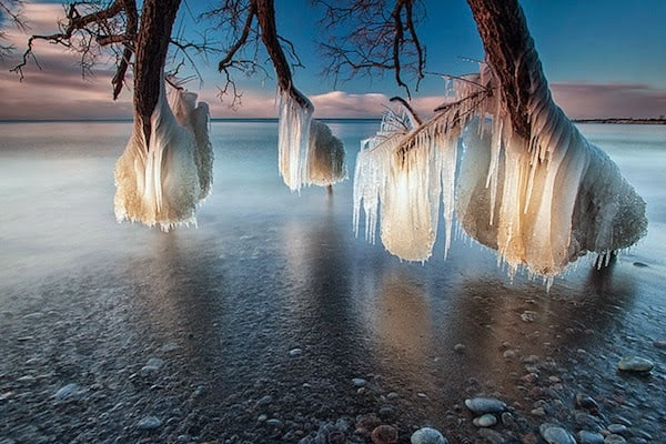 Frozen+trees+near+Lake+Michigan.+-+The+30+Most+Amazing+Photos+Of+Frozen+Things+In+Honor+Of+The+Coldest+Morning+Of+The+21st+Century