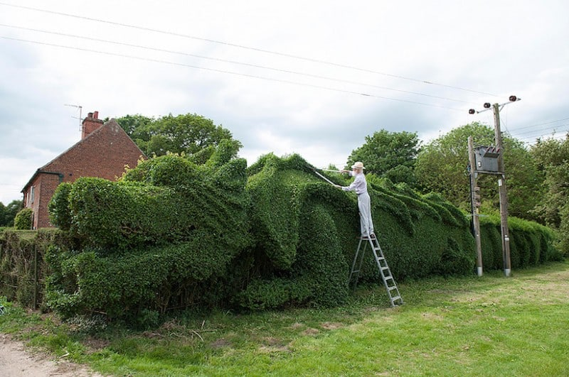 JohnBrooker hedge dragon 01 - John Brooker Spends 13 Years transforming a Hedge into a Massive Dragon