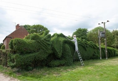 John Brooker Spends 13 Years transforming a Hedge into a Massive Dragon